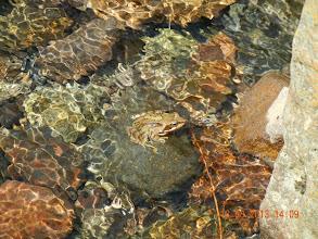 Photo: avez vous vus la grenouille ?