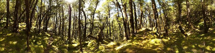Photo: New Zealand, Southland, Mt Aspiring National Park, Haast Pass