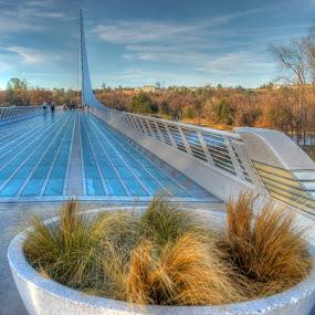 a most Elegant structure by Susan Hanson - Buildings & Architecture Bridges & Suspended Structures ( pwcbridges )