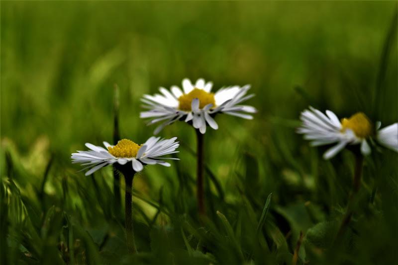 E' Primavera di sandro_brillarelli_giovanna_feliziani