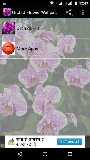 Orchid Flowers HD Wallpaper