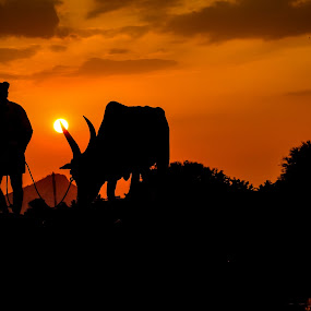 Way to home by Gowri Shankar - Landscapes Sunsets & Sunrises ( sunset, silhouette, evening )