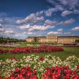Schönbrunn Palace by Ole Steffensen - Buildings & Architecture Public & Historical ( wien, vienna, schönbrunn, royal, flowers, palace, garden, austria )