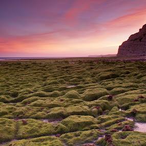 Green by Ricardo Zambujo - Landscapes Waterscapes
