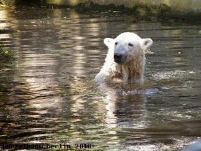 Photo: Bye for today wuenscht ein zufriedener Knut :-)