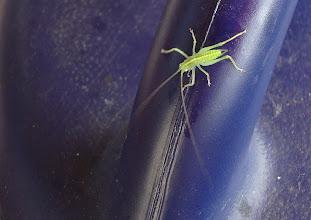 Photo: Kleines grünes Insekt auf grosser blauer Giesskanne