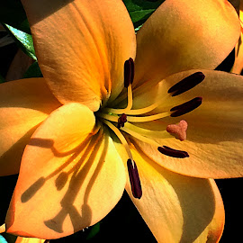 Lily by Janette Ho - Instagram & Mobile iPhone
