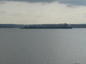 Photo: loons watching the tug and freighter leaving port