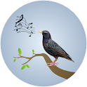 Starling Birdsong icon