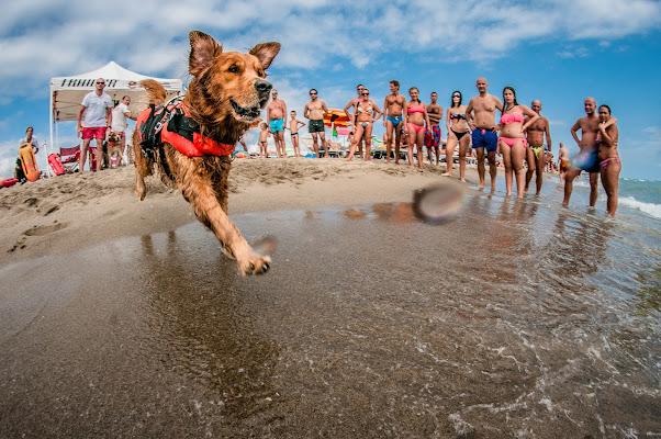 Rescue Dog di Maurizio Valentini