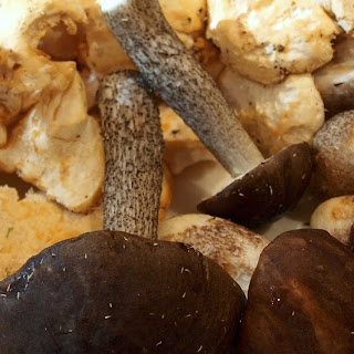 Recipe - Pheasant and wild mushroom casserole.