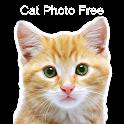 Cat Photo Free