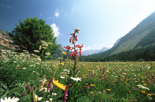 France-Mercantour-National-Park.jpg - Mercantour National Park in southern France is home to more than 2,000 species of flowering plants.