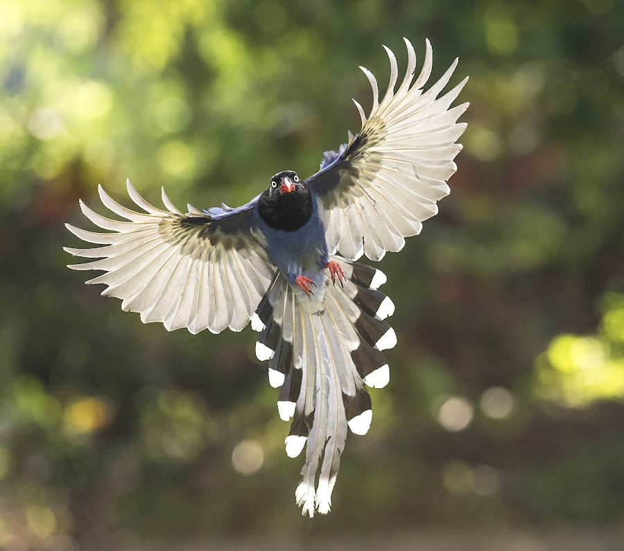 by 永聖 黃 - Animals Birds