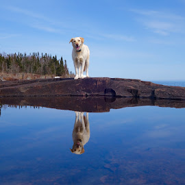Betsy Reflections by Sandra Updyke - Animals - Dogs Portraits ( betsy, reflections, lake superior, dog, posing )