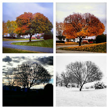 Photo: #instagood #photooftheday #beautiful #nature #igers #picoftheday #bestoftheday I #love this tree :)