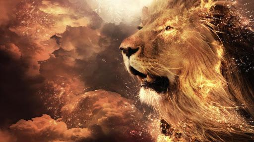 Lion HD Live Wallpaper