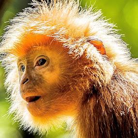 Im Looking by Ken Nicol - Animals Other Mammals (  )