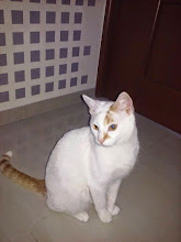 Photo: Zdjęcie kota wyadoptowanego od nas do p. Patrycji. Jest cudny. Dziękujemy.