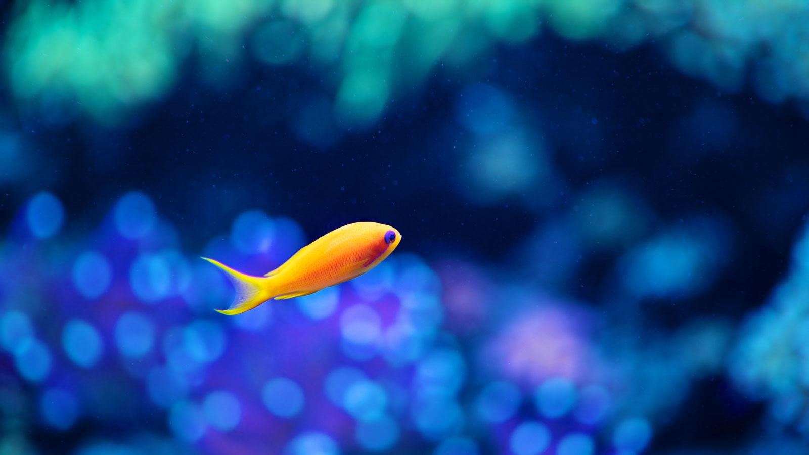 Fish HD Wallpaper Android Apps on Google Play