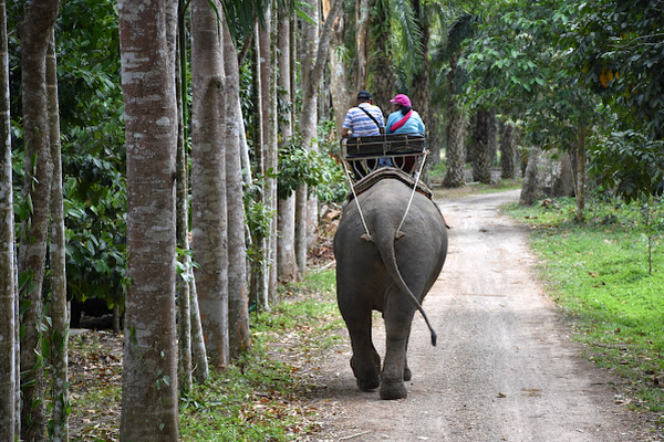 Ride through rubber tree and palm oil plantations