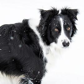 by Bonnie Filipkowski - Animals - Dogs Portraits