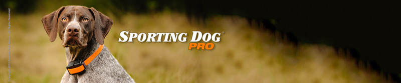 Photo: © 2012 Sporting Dog Pro - All Rights Reserved