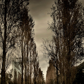 Buenos Aires by Jime Fernandez - City,  Street & Park  City Parks ( camino, path, puerto madero, buenos aires, parque )