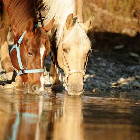 Watering Time by Tara McKenzie - Animals Horses ( #cowboy, #horsephotgraphy, #horseart, #horse, #colorfulhorses, #horselovers, #reflections, #water, #equine )
