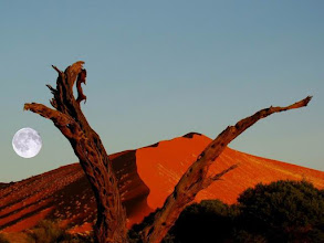 Photo: Désert du Namib, The Namib Naukluft National in Namibia
