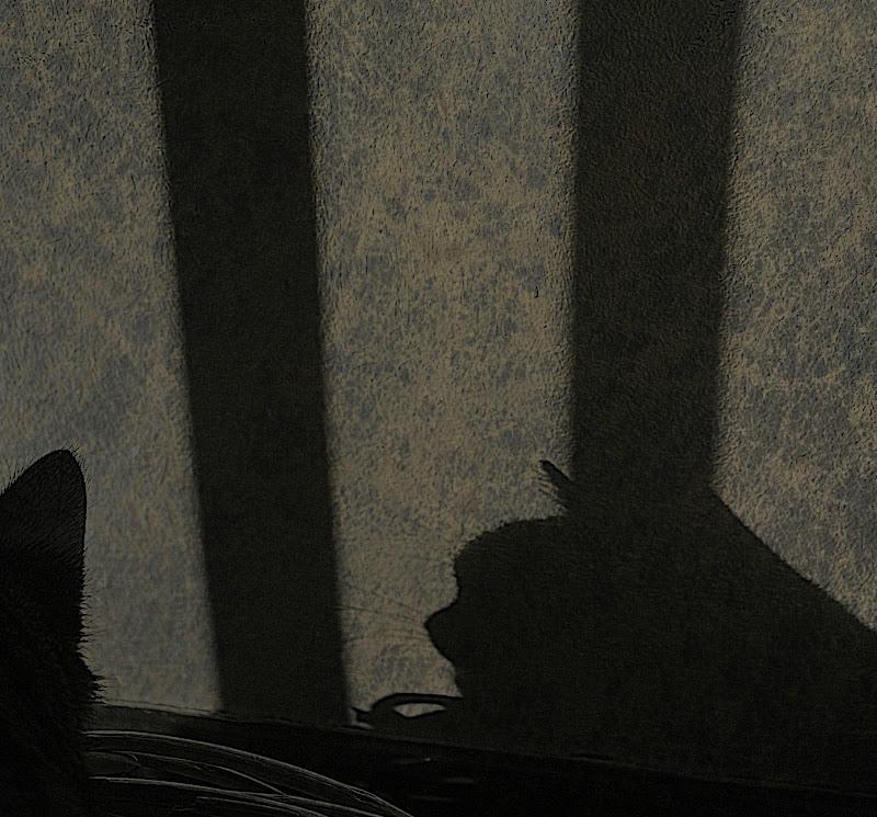 Ombre Feline di marisa_serafini