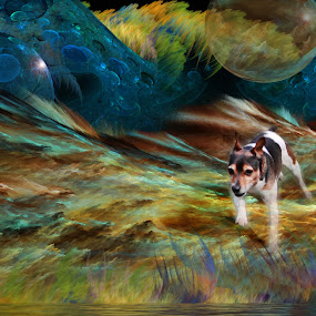 Lost in a Dream by Val Ewing - Abstract Fine Art ( pet, layers, fun, dog )