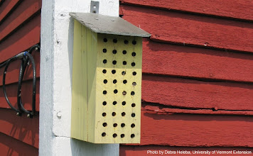 Photo: Bee mansion?! Check out that slate roof--nice!