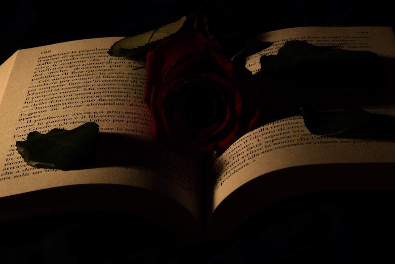La rosa rossa di tatiana morello