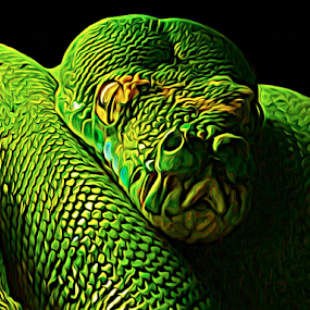 Green Boa by Kevin Adams - Illustration Animals