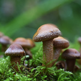 by Anngunn Dårflot - Nature Up Close Mushrooms & Fungi