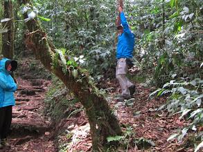 Photo: Jane admires Tarzan after landing