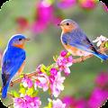 Bird Wallpaper Best 4K APK