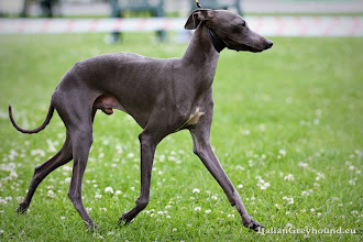 Photo: F: JChPL ChPL CE Sighthound W'14 NARIO SACRAMENTO Is Noveles