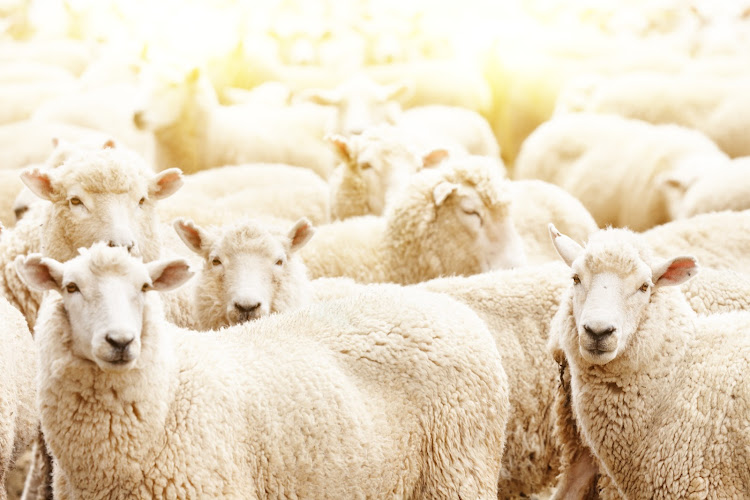 Concerns have been raised about conditions aboard the vessel in which the sheep will be transported. Stock photo.