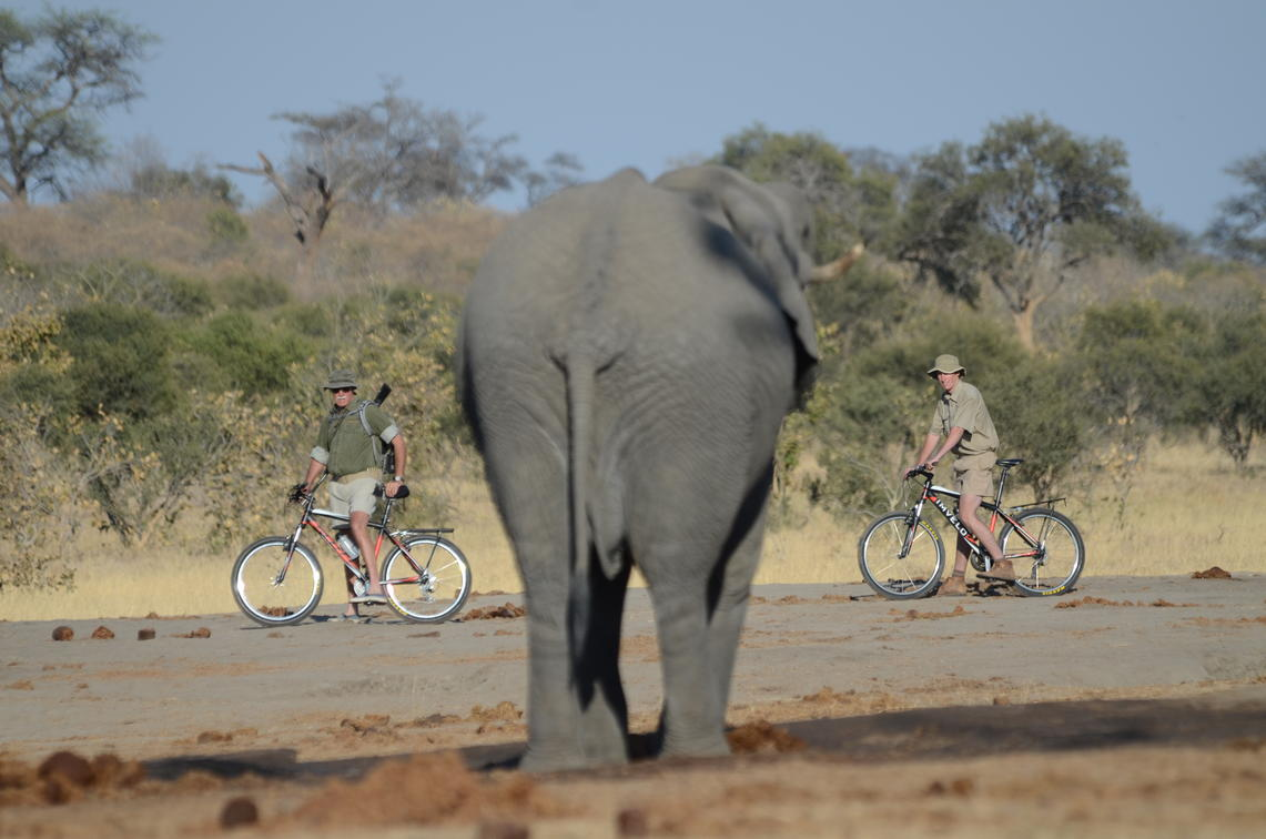 two men biking while seeing an elephant in Hwange Zimbabwe