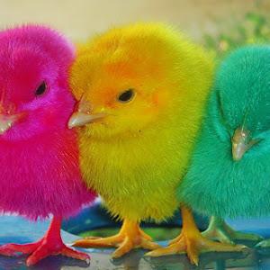 rainbow colour.jpg