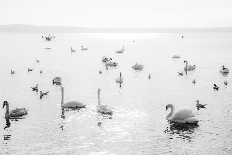 Il lago dei cigni di filippo_cuffaro