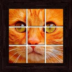 Cats Puzzles - 101 pictures Icon