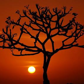 Sunset and Frangipani by Yande Ardana - Landscapes Sunsets & Sunrises ( bali, sunset, indonesia, frangipani, flower )