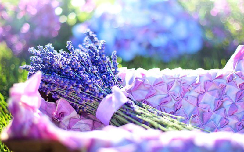C:UsersRafiq AwanDesktopsaving jini flower.jpg