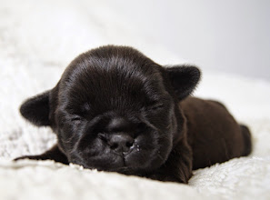Photo: Hierners Back In Black 10 days old