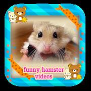 Funny Hamster So Cute