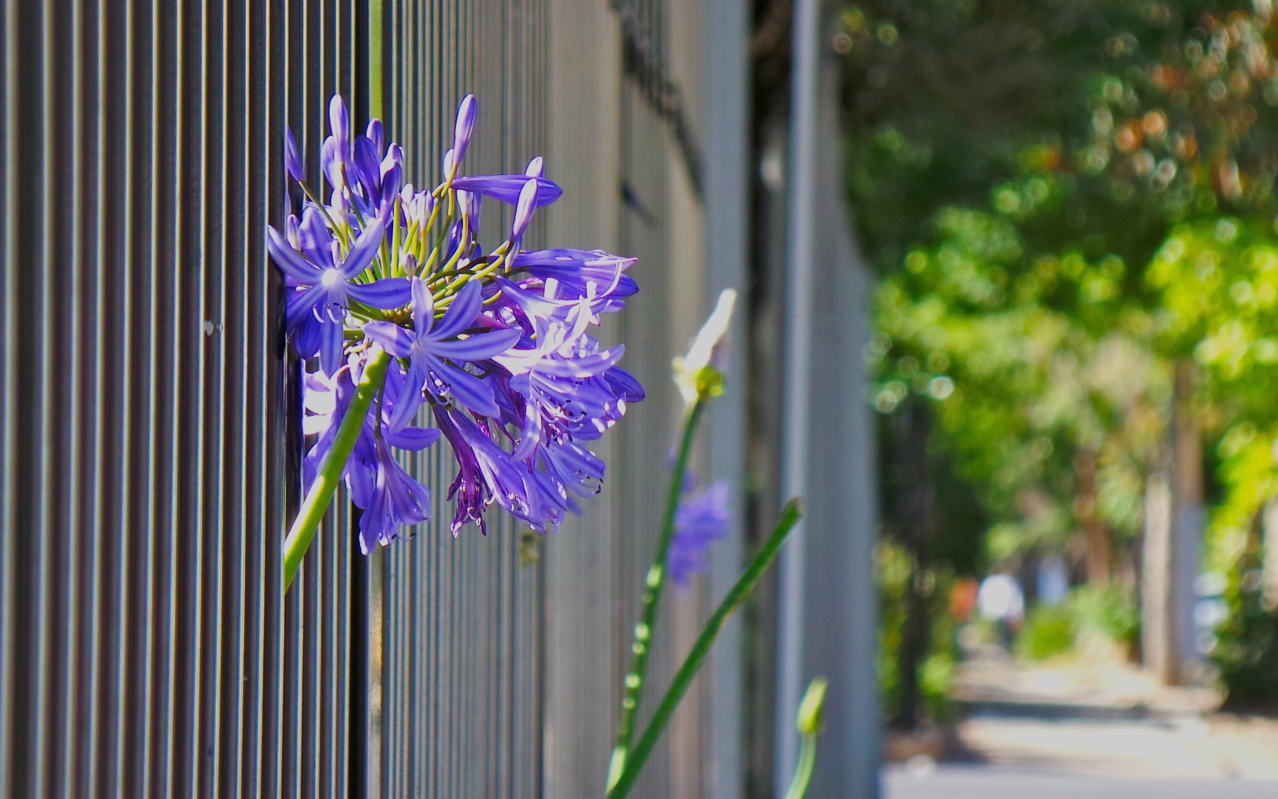 Come Recintare Un Giardino come recintare il giardino: consigli e idee