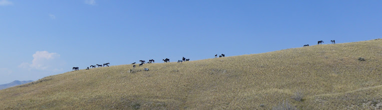 Photo: Work of art near Three Forks - just north of Wheat Montana